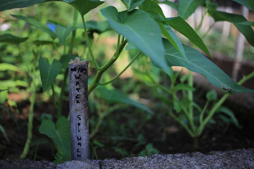 Bali Bio Villas Organic Garden